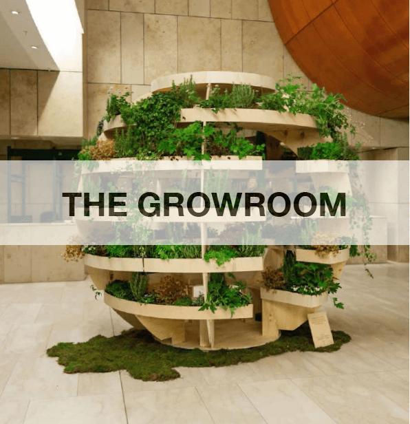 Growroom, ou como Abrantes tem espaço para crescer a partir de um jardim comunitário