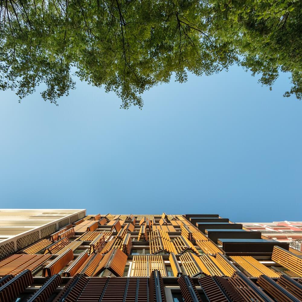 Lisbon Wood