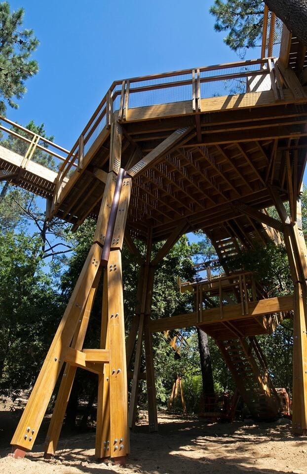 Serralves inaugura Treetop Walk, o passadiço que sobe até à copa das árvores
