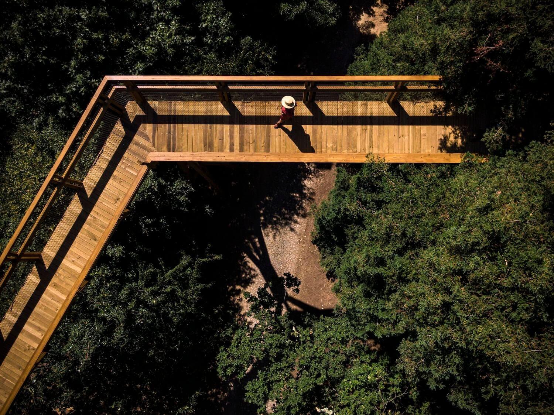 Treetop Walk Serralves