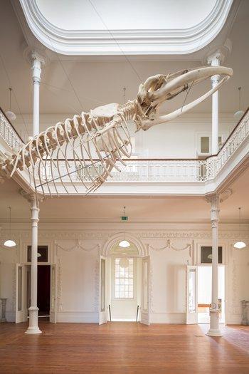 Esqueleto da baleia suspenso no átrio central da Casa Andresen, Galeria da Biodiversidade © JFF