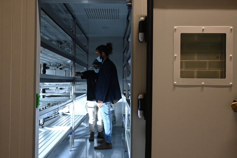 Projecto inovador Bios Urban Farm irá nascer  no campus da Nova SBE
