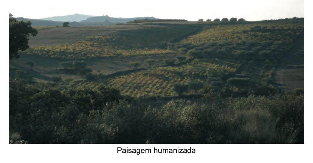 Paisagem humanizada